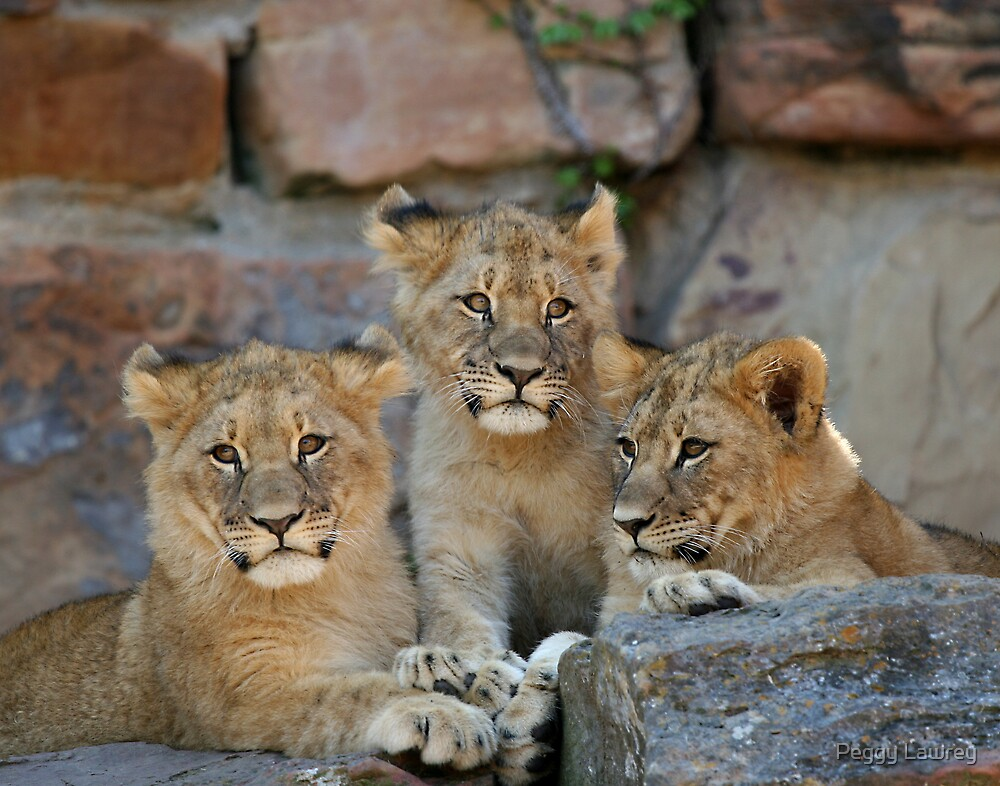 Three Little Kittens by Peggy Lawrey