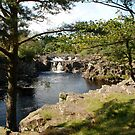 Low Force by dougie1