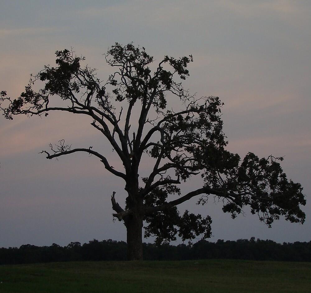 The Tree by Stephanie  Taylor