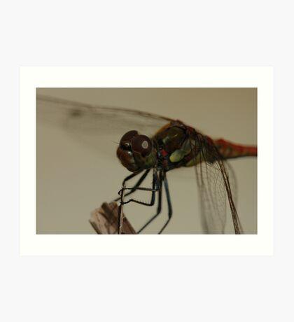 dragonfly near pool, up close Art Print