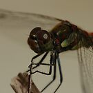 dragonfly near pool, up close by mtths