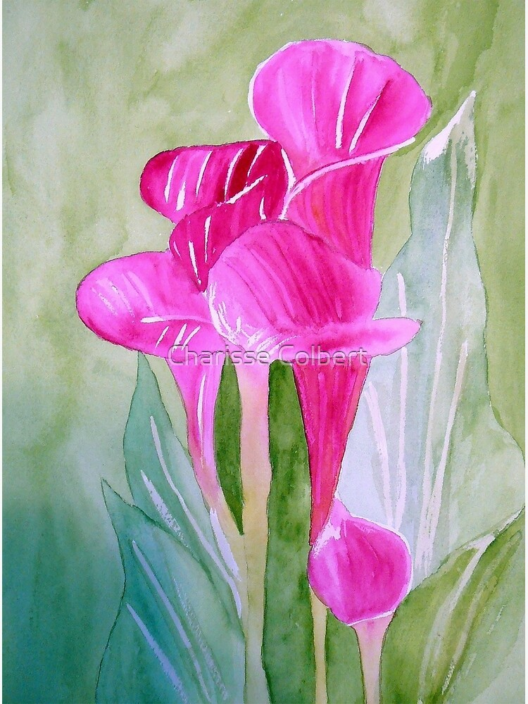 Calla Lily by charissecolbert