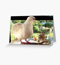 Feed YOU? ... You Must Be Joking! - Dove & Sparrow - NZ Greeting Card