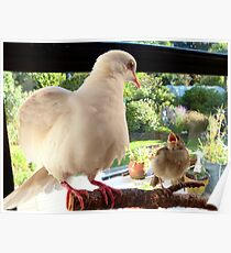 Feed YOU? ... You Must Be Joking! - Dove & Sparrow - NZ Poster