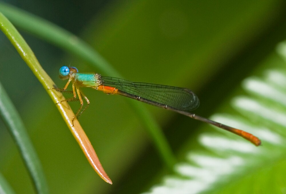 Little dragonfly by PDP1