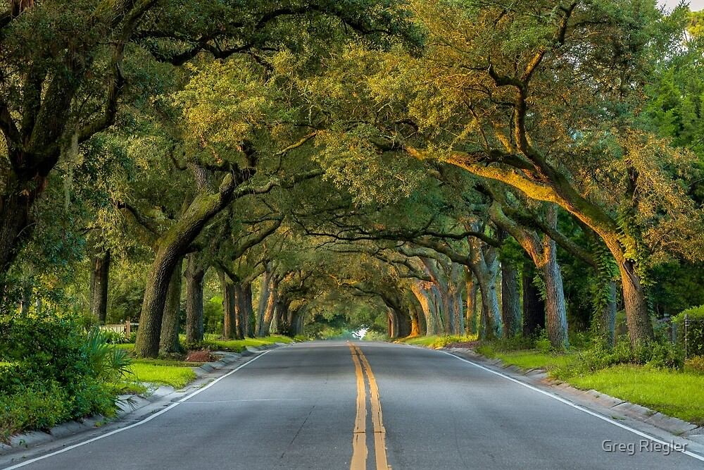 12th Avenue Tree Archway by Greg Riegler