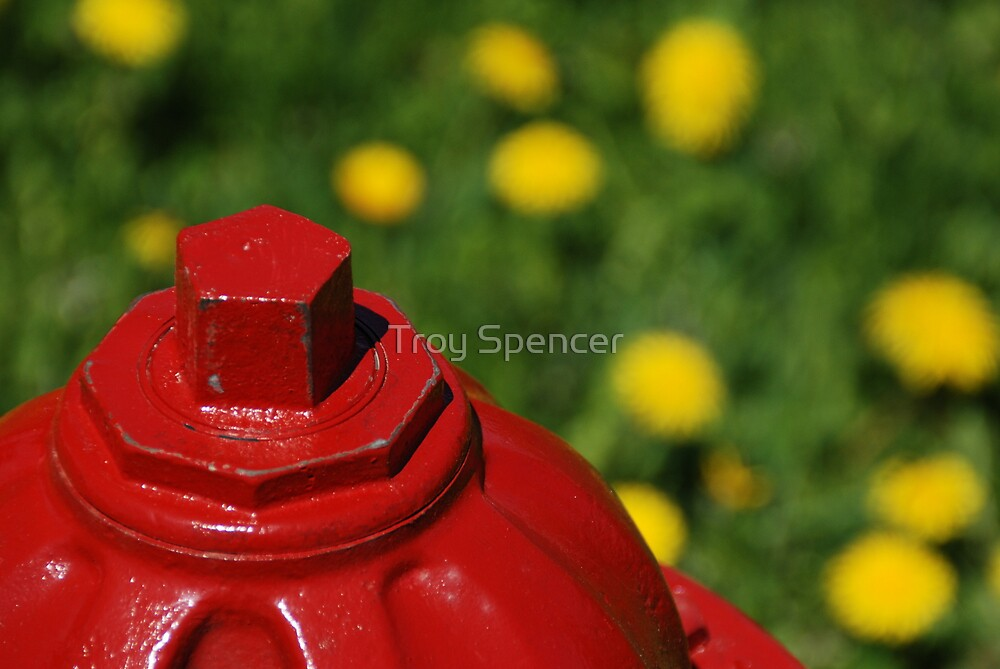 red, yellow, green by Troy Spencer