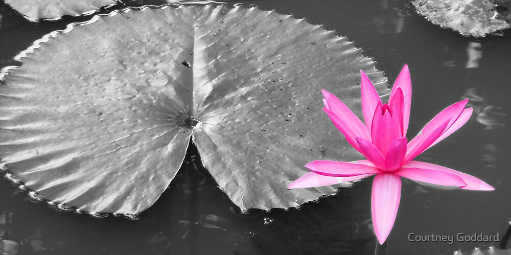 lily pad by Courtney Goddard