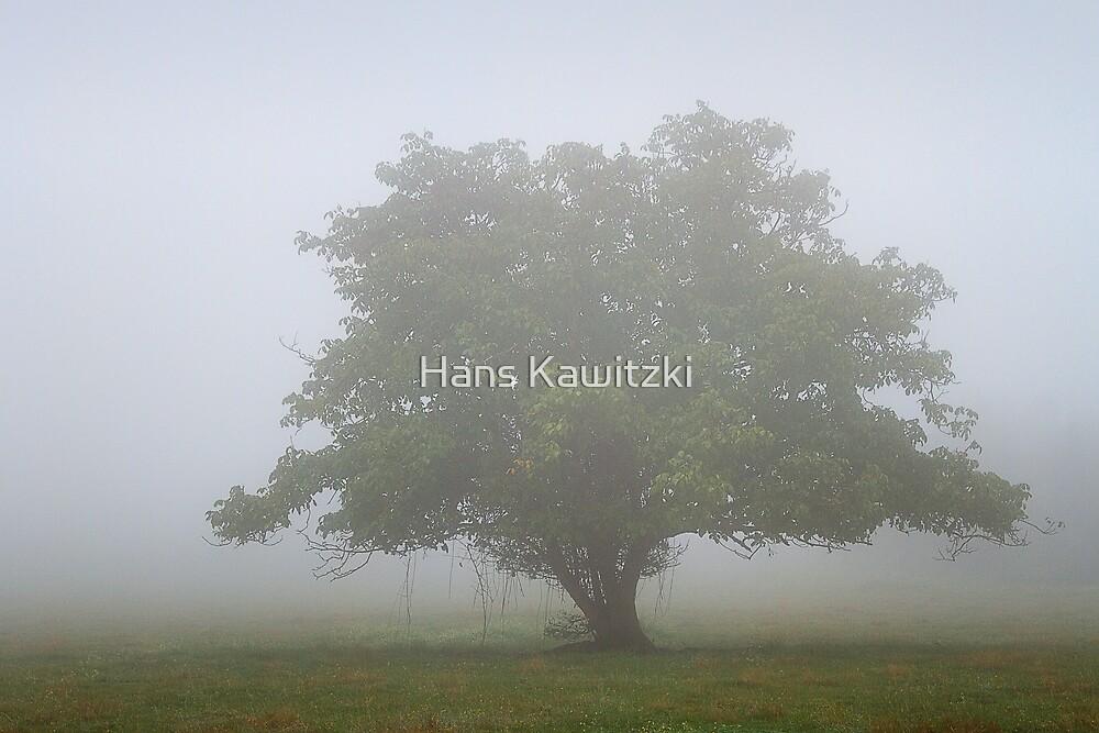 0302 Lost in fog by Hans Kawitzki