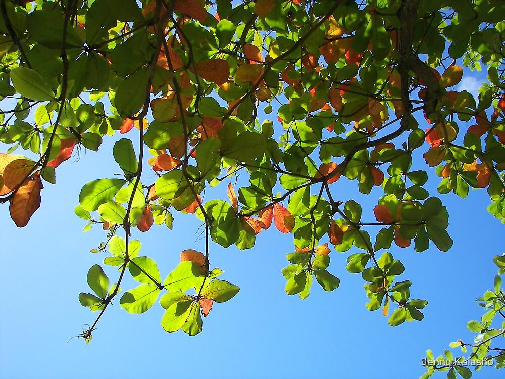 Spring Leaves by Jenny Kalasho