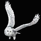 Snowy Owl Flight by Walter Colvin