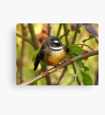 A Life With Love Will Have Some Thorns - Fantail - NZ Canvas Print