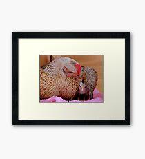Ahhh.. My Little Sleeping Beauty - Silver-Duckwing - NZ Framed Print