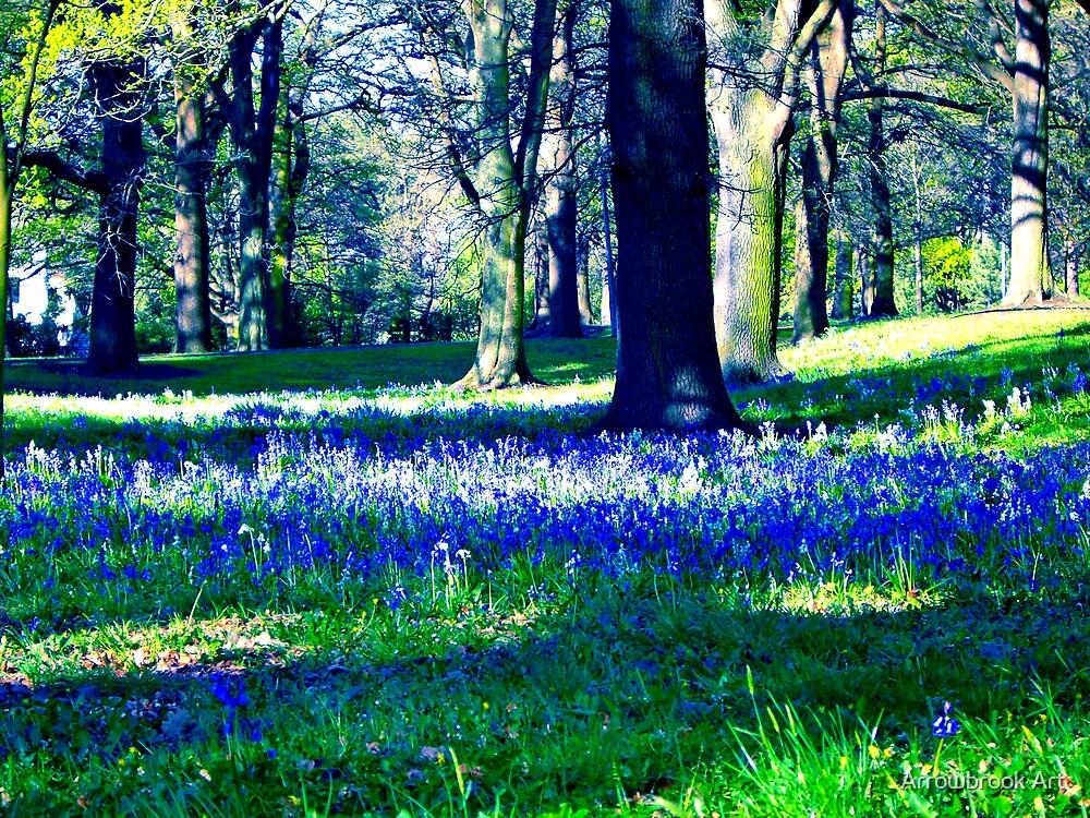 Bluebell Wood by John Brotheridge