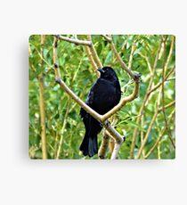 Black Crown in Tree Canvas Print