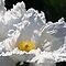 ASSORTED BEAUTIFUL FLOWERS
