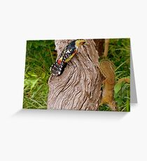 OUT Out!!... This Is My Cavety!...Crested Barbet & The Squirrell Greeting Card