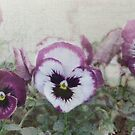 Sweet little pansies by Julie Sherlock