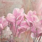 Cyclamen by Julie Sherlock