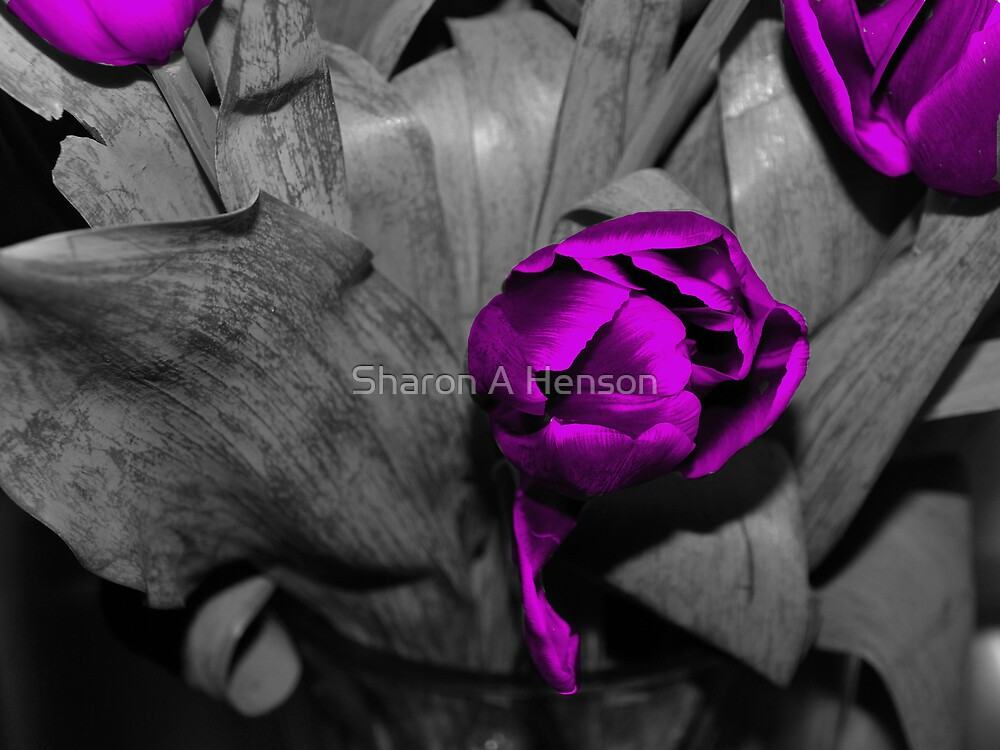 PURPLE by Sharon A. Henson