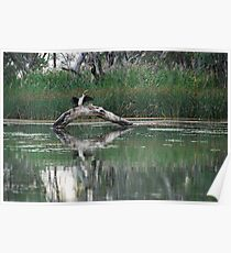 Heron - Murray River - Renmark Poster