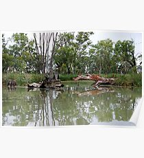 River Murray - Renmark S.A. - Backwaters Poster