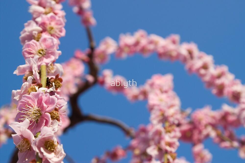 Spring sky by ablyth