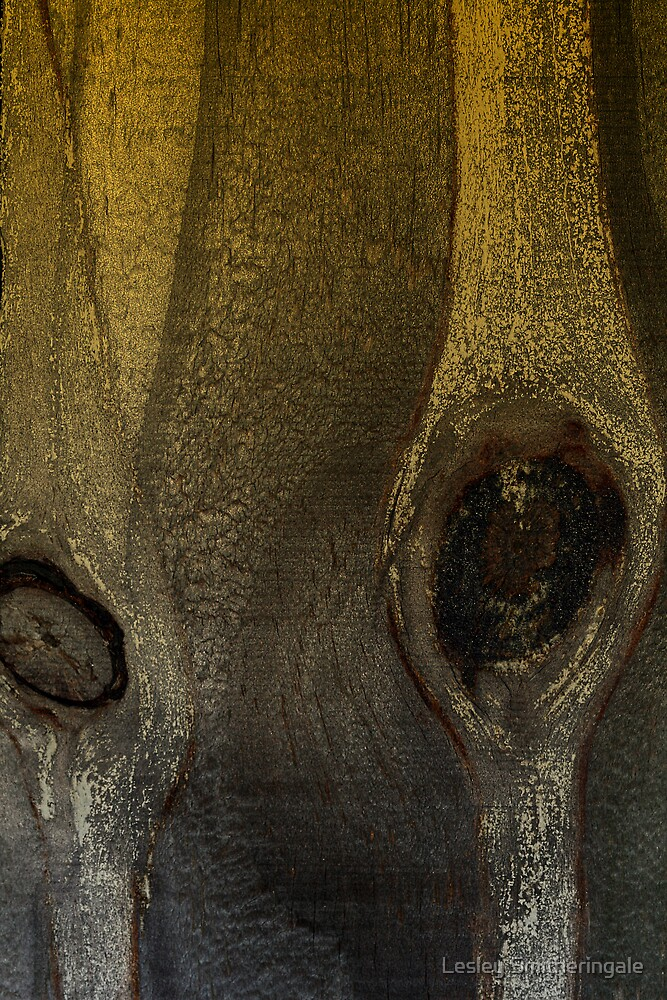 Eyes of Nature Sepia by Lesley Smitheringale