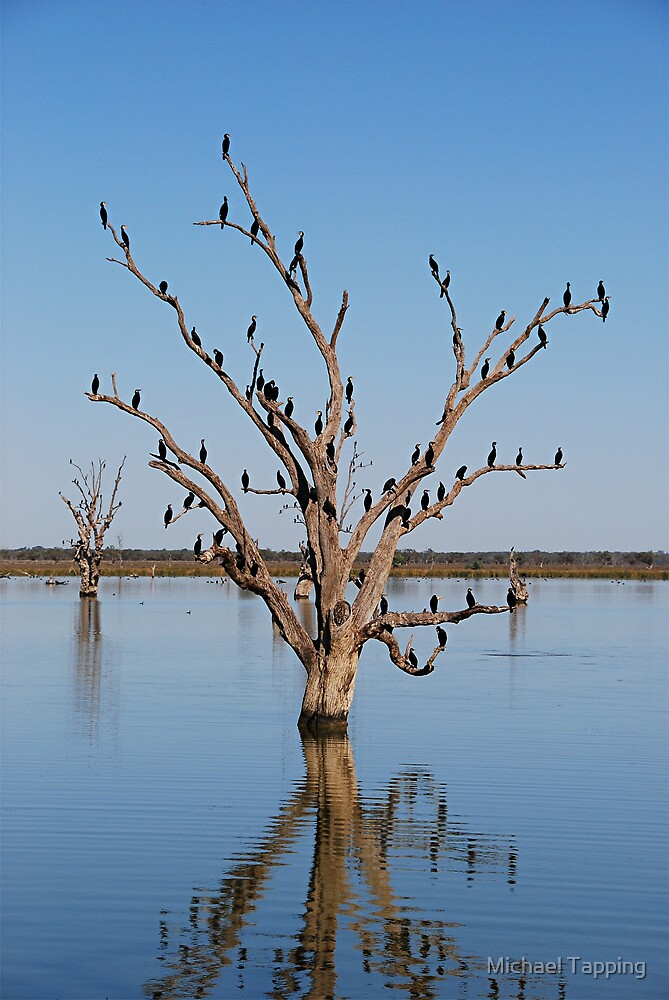 55 Black Birds In a Tree - Barmera - South Australia by Michael Tapping