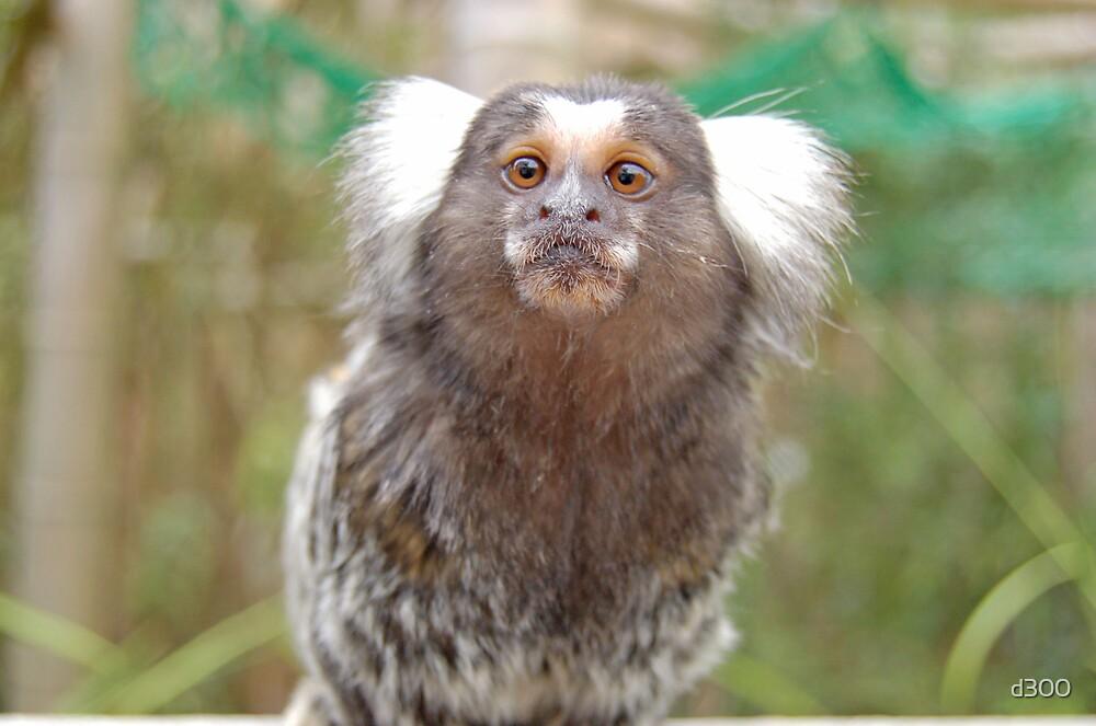 Cheeky little monkey by d300