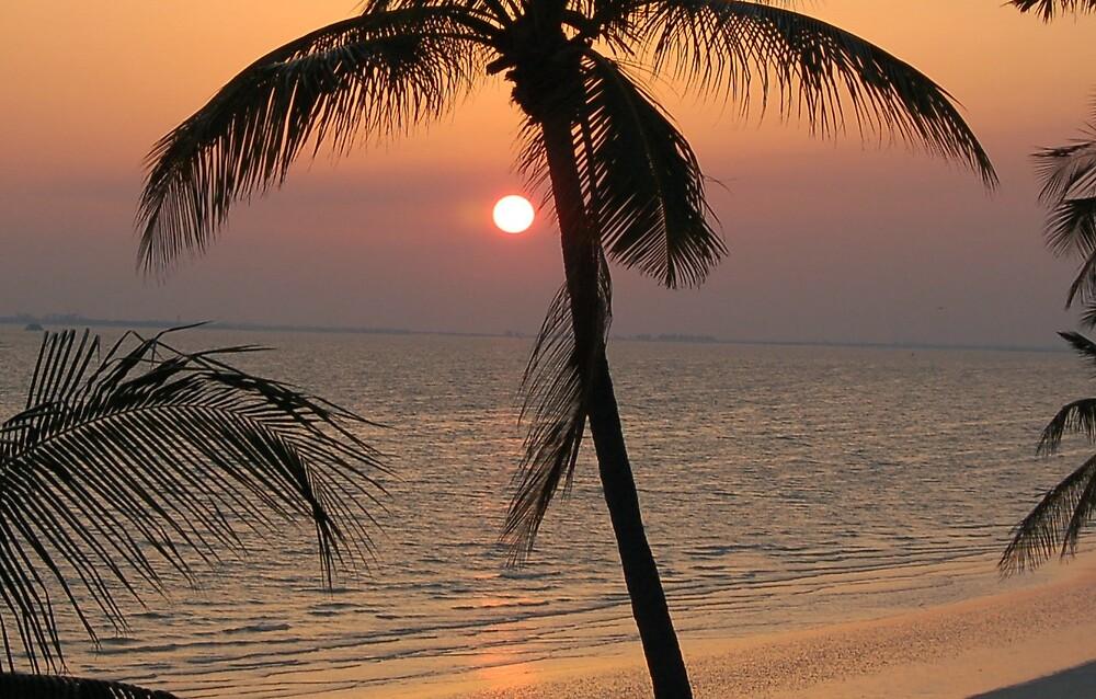 Florida Sunset by terrylazar