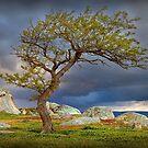 0314 Spring colours - Dog Rocks by Hans Kawitzki