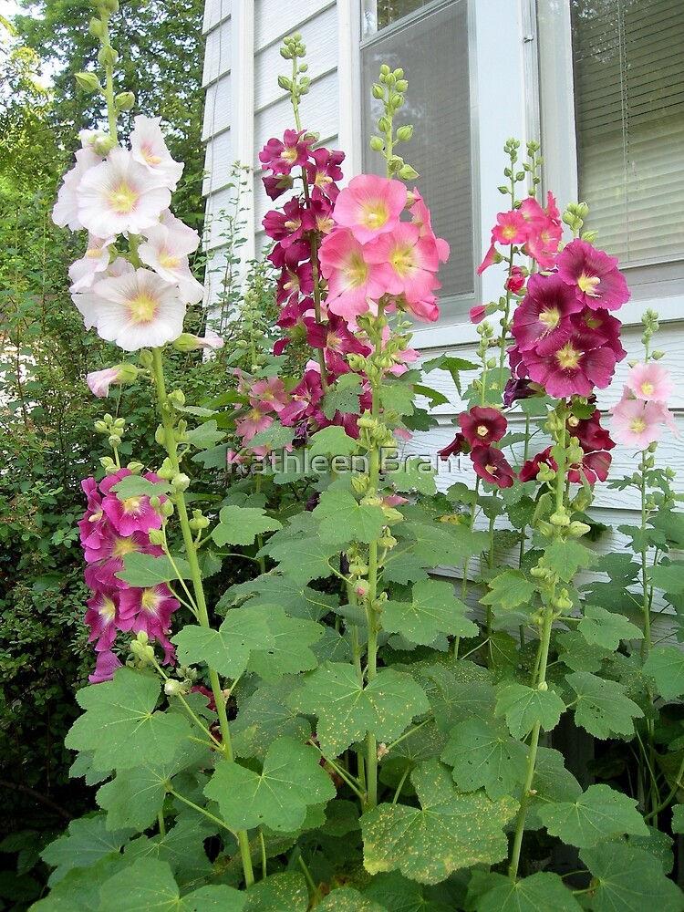 Hollyhocks by the Window by Kathleen Brant