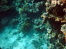 Red Sea Eilat coral reef by Moshe Cohen