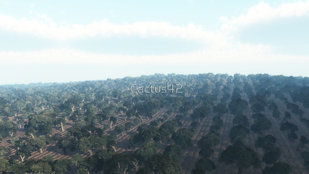 Oliveraie du sud de l'Italie / Olive groves of southern Italy by Cactus42