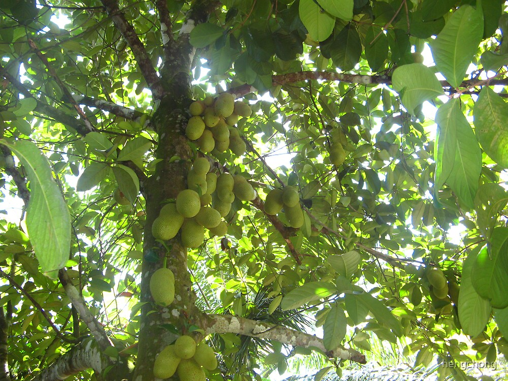 jackfruits by hengchong