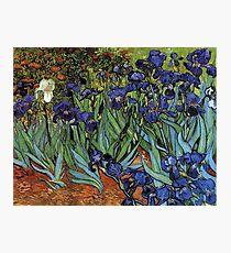 Irises -Vincent van Gogh Photographic Print