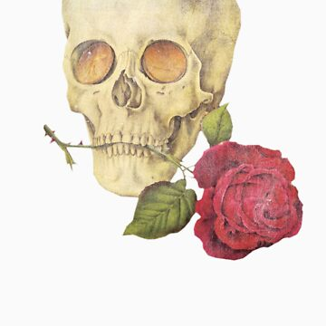 Skull with Rose (Goldfinger) by ndw1010