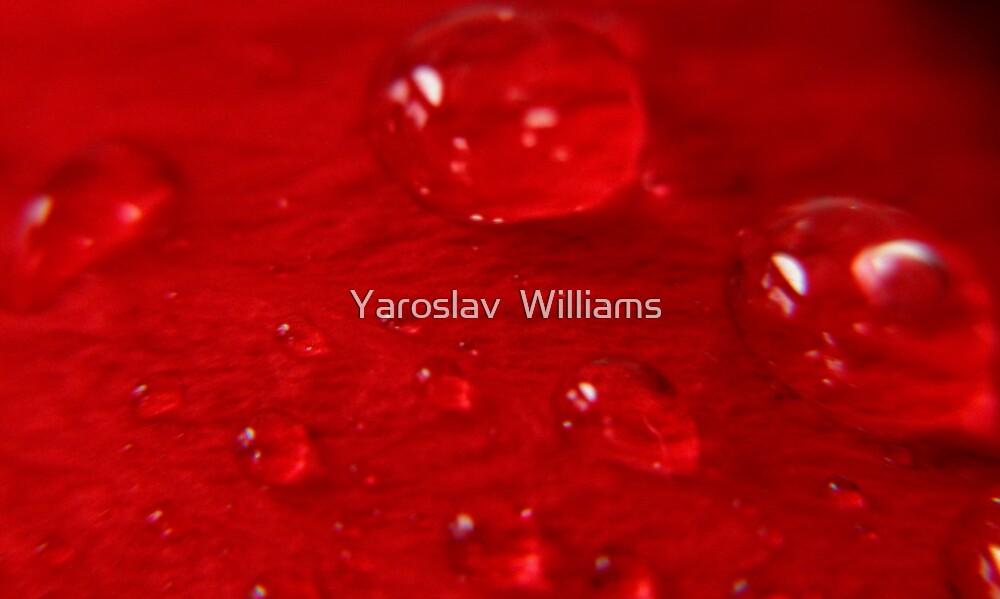 Morning dew by Yaroslav  Williams