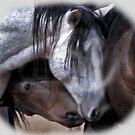 Wild Mustangs in Love by Judson Joyce