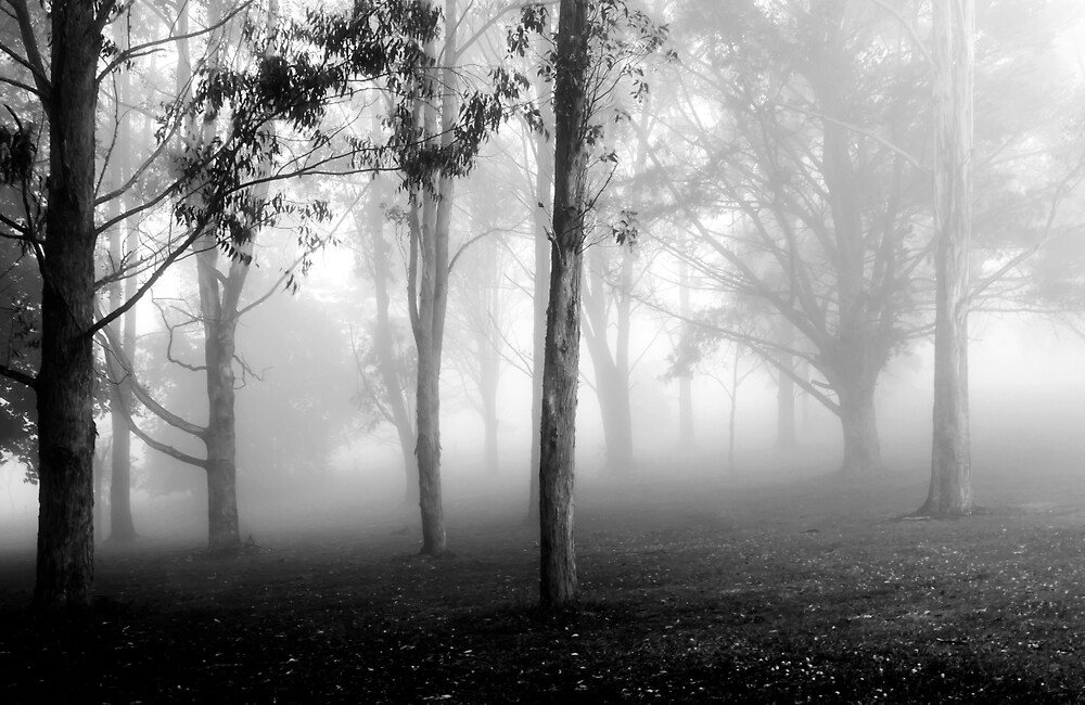 Misty Mornings  by caths13