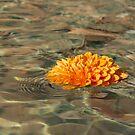 Floating Sunshine - a Vivid Orange Chrysanthemum in Velvety Fountain Reflections by Georgia Mizuleva