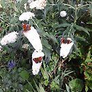 Butterflies by pat oubridge