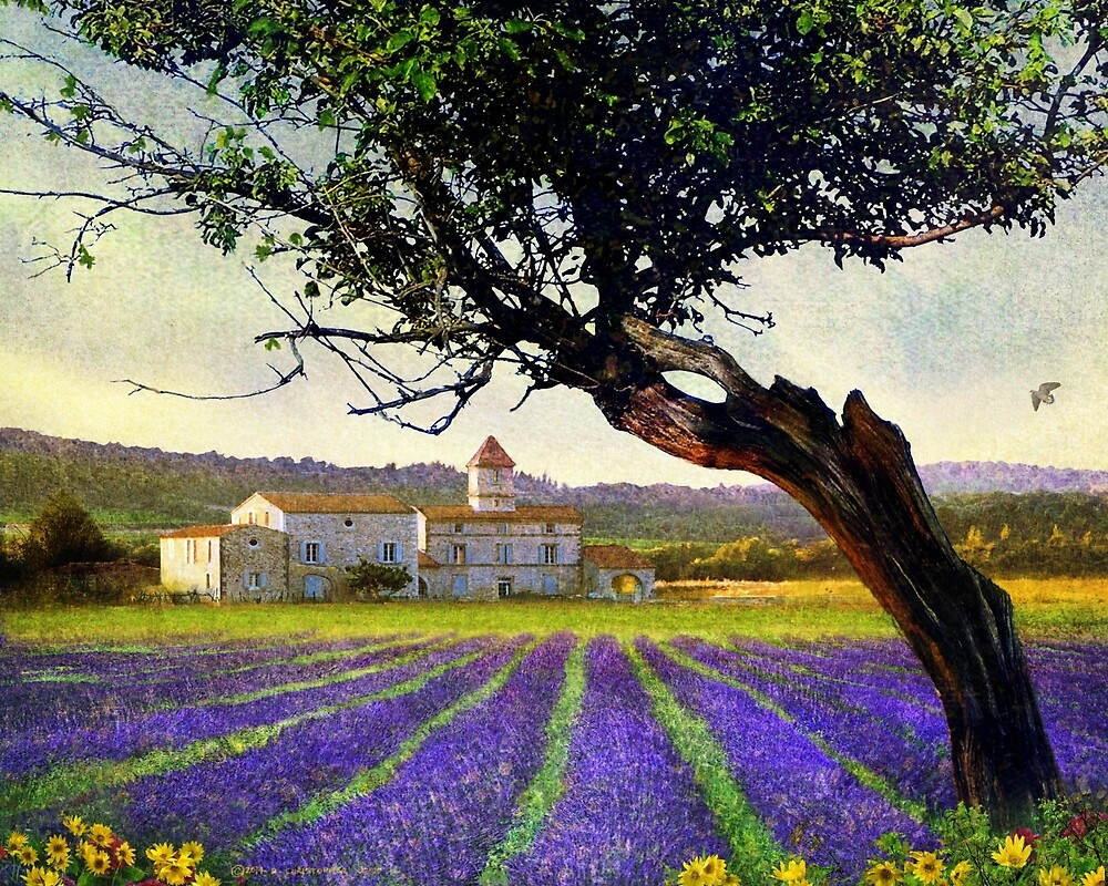 lavender fields and chalet at sunset by R Christopher  Vest