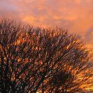 Gorgeous Sunrise by pat oubridge