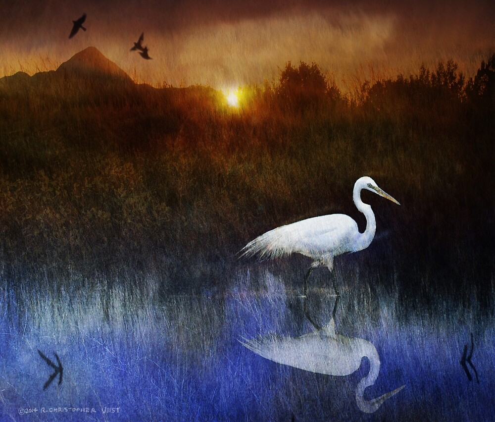 dawn at the meadow marsh egret by R Christopher  Vest