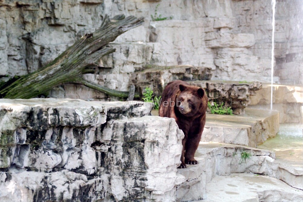 Peek a Boo Bear by April Webb