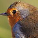 Robin up close - Olympus OM-D E-M1 MK2 by Mark Baldwyn