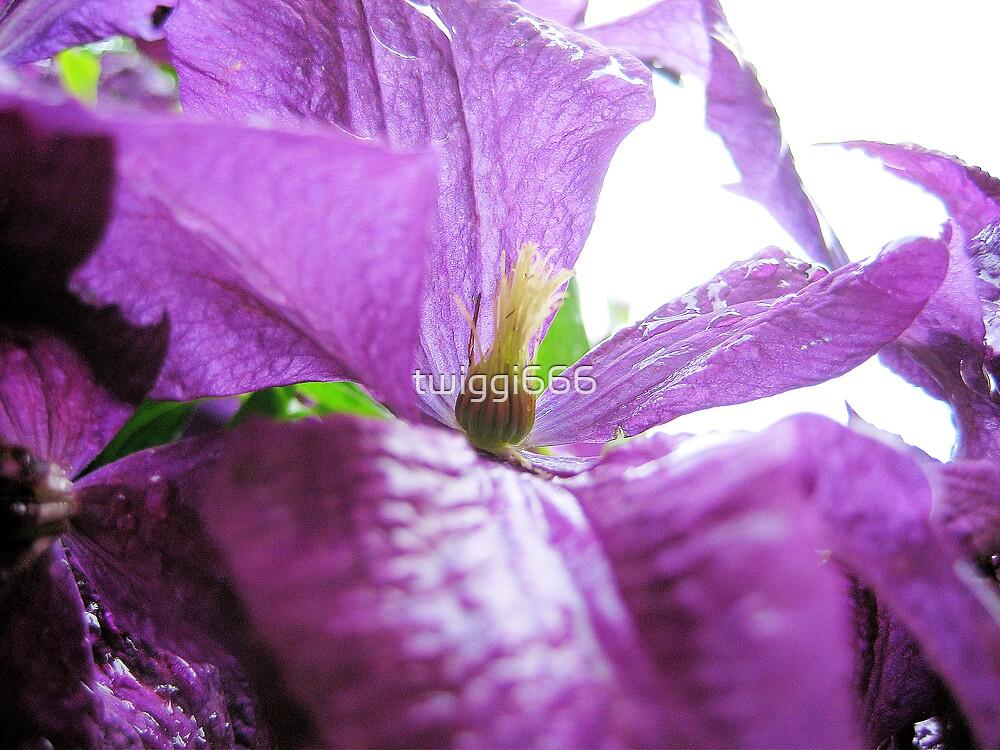 purple haze by twiggi666
