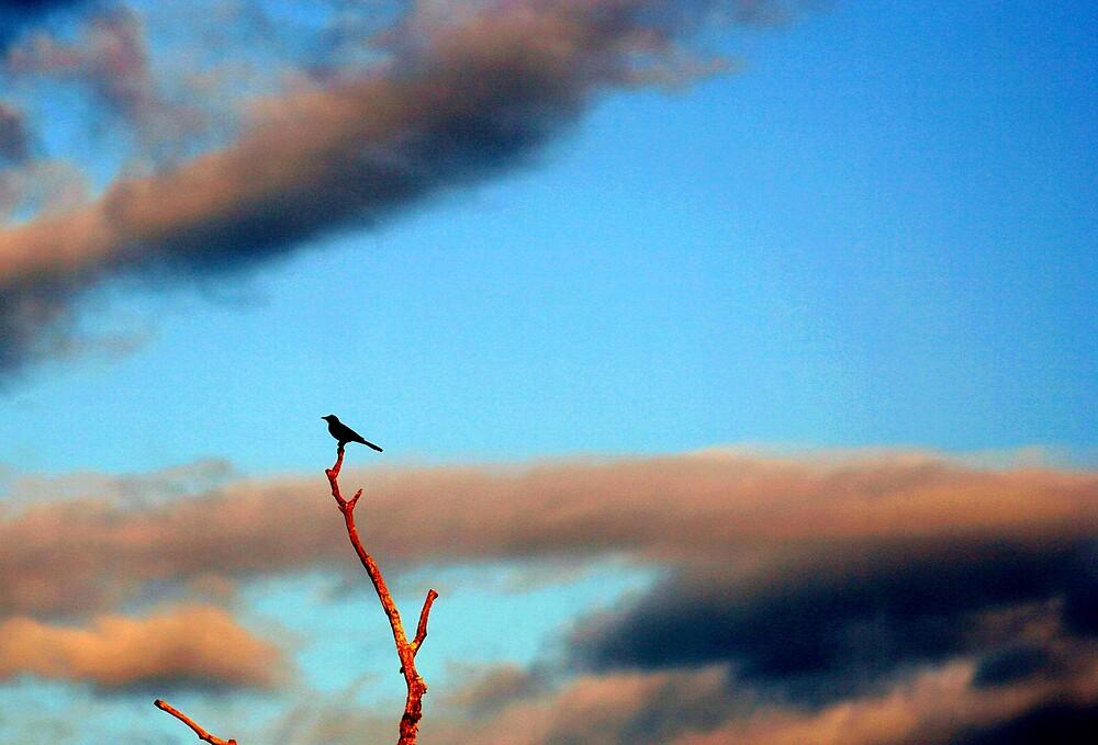 A Solitary Disciple by zenmatt
